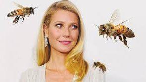 مقابله با آرتریت پسوریاتیک با زنبور درمانی