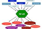 عدم تعادل (اناف-کاپا بی) با بروز پسوریازیس و آرتریت روماتوئید ارتباط دارد