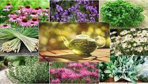 آیا پسوریازیس با استفاده از گیاهان دارویی قابل درمان است؟